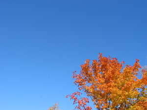 autumn leaves and blue sky 3