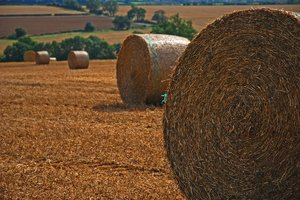 bales: no description