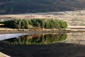 Reflected Tree 2: Trees reflected in reservoir at Harlaw, in Pentland Hills near Edinburgh