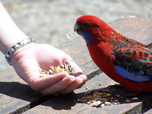 Feeding the bird 2
