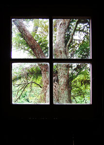 Tree out the shack window