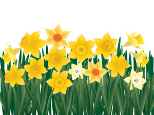 Lent Lilies: ...aka daffodils.  Another illustration for Easter