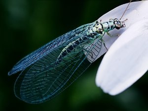 dragonfly: No description