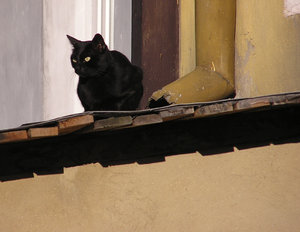 Cat: A cat on a street.