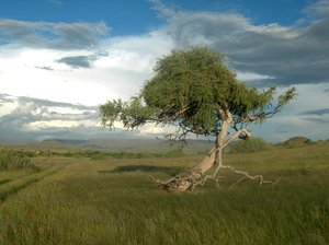 tree 1: photo taken in Namibia