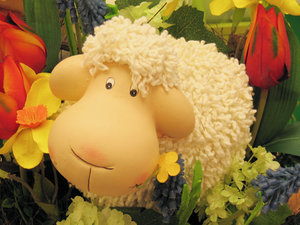 sheep in flowerbed