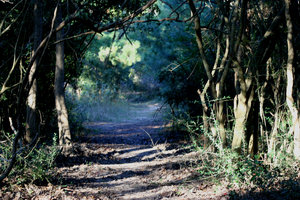 Fairytale Path: In a dark path with the sun and shadows at the end ofthe path.