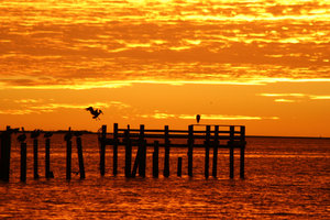 Pelican in Red Sunrise