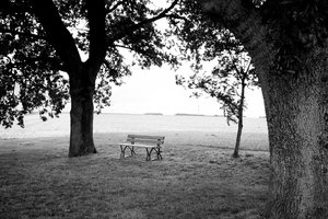 Bench and trees 2