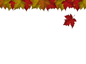 Falling Leaf Card: Card with falling maple leaf motif.  White background, lots of copyspace.