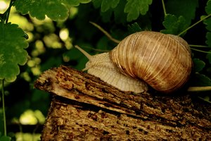 snail on the tree trunk 2