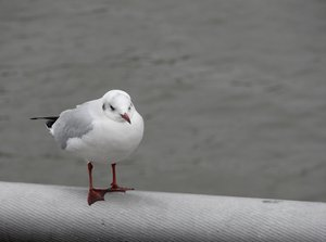 tired seagull