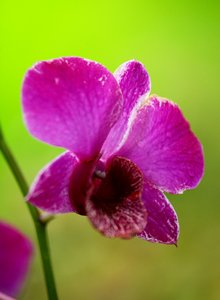 Orchid Series 2: Snapshots of pretty orchids