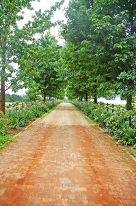 Farm Lane 2: A typical tree-lined lane in the Garden Route.NB: Credit to read