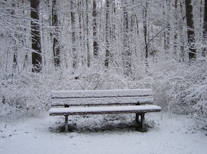 bench in winter forest
