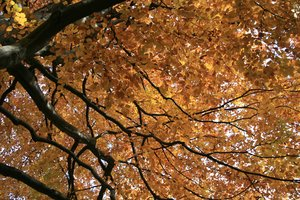 Autumn background: Autumn background