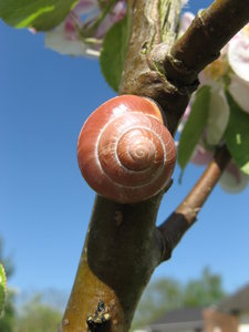 Snail in the Apple Tree