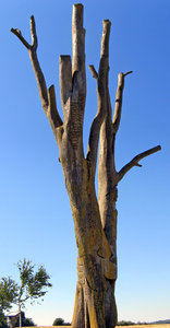 Dead tree with runes: no description
