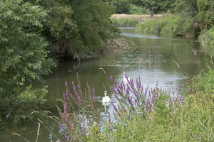 Summer River: A river in West Sussex, England, in summer.