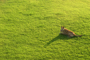 dog on green