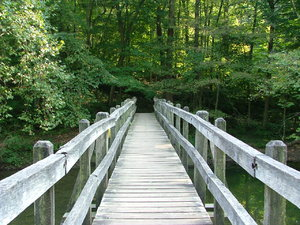 Wooden bridge in the summer