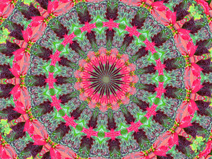 poinsettia mandala: abstract backgrounds, textures, patterns, kaleidoscopic patterns, circles, shapes and  perspectives from altering and manipulating red and green poinsettia images