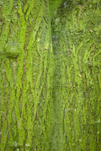 green tree: very green bark