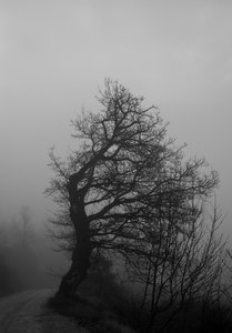 fog 1: Fog in the Umbrian countryside in Italy
