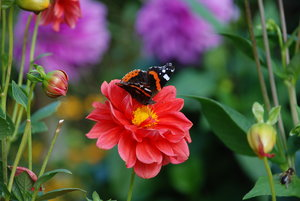 autumn flowers and butterflies