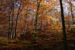 Autumn Forest: As seen on a walk on a sunny morning at the Danube Bend