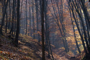 Autumn Forest: As seen during a walk in the Danube Bend