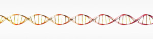 DNA molecule 1: DNA double helix illustration