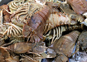 crabby crustaceans: fish market crab varieties ready for purchase and home cooking