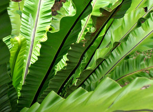 green fanning fronds
