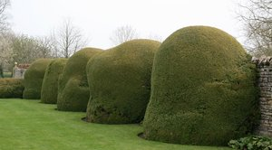 Abstract topiary