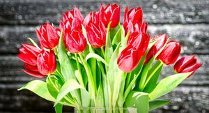 Tulips bunch