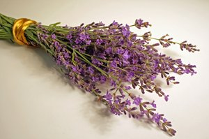 Lavender: Still life of a sweet scent flower.