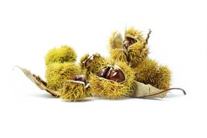 Chestnuts #2