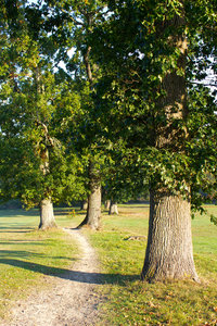 Old path by oak trees: An old boundary path and oak (Quercus) trees in West Sussex, England.