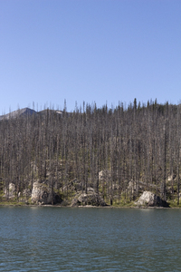 Remains of a forest fire