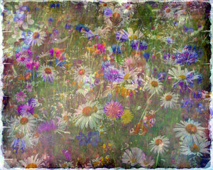 Wildflower Collage 3