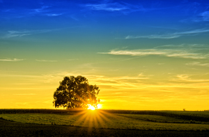 Sunset - single Tree