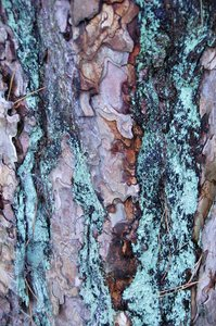 Tree bark detail