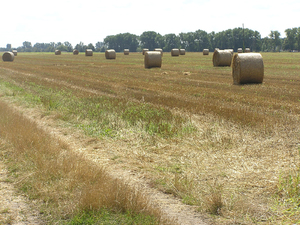 Hay Bales: Hay bales on a field.