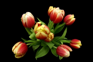 Fisheye Tulips: Tulips with many colours taken from above using fisheye lens