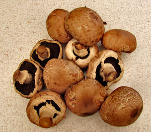 brown mushrooms1