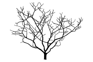 Silhouette Magnolia Tree: a winter silhouette of an elegant magnolia tree (improved)