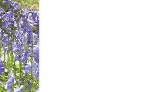 Nature Banner 2