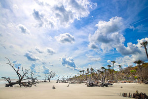 South Carolina Tropical Beach