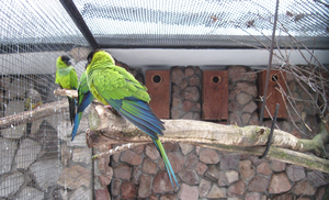 Parrots: Two birds in the zoo.